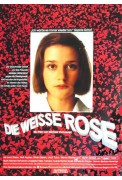 Weiße Rose (The White Rose)